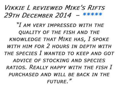 Mikes Rifts Review 6