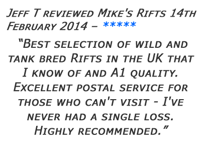 Mikes Rifts Review 23