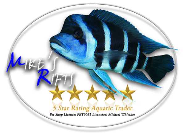 Tanganyika And Malawi Cichlid Fish For Sale In The Uk Mike S Rifts Homepage